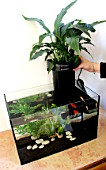 Step by step of a natural filter for water of an aquarium: 6/ Installaton on the aquarium