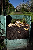 Garden composter showing woodlice (Oniscidea) and compost worms (Eisenia fetida)