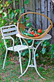 Seasonal vegetables: courgettes, cucumbers, tomatoes, on a table in a basket in the countryside, Dordogne, France