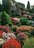 Rhododendrons in bloom at Rock Garden, Leonardslee lakes & gardens, England