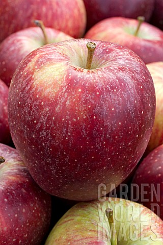 Malus_domestica_Red_Delicious_Apple