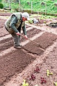 Preparing the kitchen garden soil before sowing