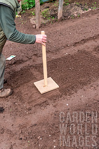 Sowing_of_Radish_Le_radical_in_a_kitchen_garden