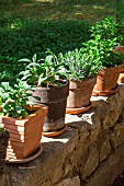Herbs: sage, lavender and mint in pots, Provence, France