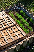 Dill and mesclun (salad mix) seedings protected from the sun with crates, Provence, France