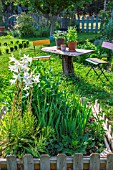 Lilium, Gladiolus, Dahliasand aromatic plants in pots, Vegetable Garden, Provence, France
