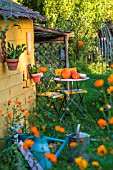 Garden shed with squash and seating area in July, Provence, France