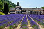 The Abbaye de Senanque, Cistercian Architecture, Gordes Village, Provence, France, Europe