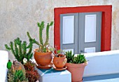 Succulent plants and painted door in background, decoration ambience, Santorini Island, Cyclades, Greece