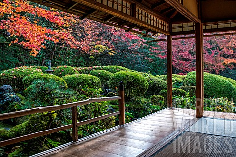 Azalea_in_Shisendo_temple_Kyoto_Japan