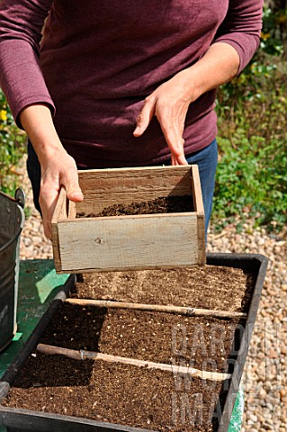 Sowing_wild_companion_plants_in_a_tray