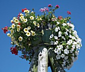 OVERHEAD FLOWER CONTAINER WITH HANGING PETUNIAS AND PELARGONIUMS WITH BLUE SKY BACKGROUND