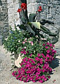 FLOWER CONTAINER WITH PETUNIAS,  CANNA,  SALVIA PATENS AND ARCTOTIS