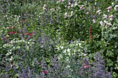 MIXED BORDER OF ROSES,  ERYNGIUM,  LARKSPUR,  LUPINS,  SALVIA