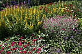 MIXED BORDER OF LYCHNIS CORONARIA, LYSIMACHIA PUNCTATA, VERBENA, SISYRINCHIUM STRIATUM, DELPHINIUMS, ALCEA ROSEA AND CAMPANULA