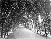 THE CRADLE WALK IN THE SUNKEN GARDENS AT KENSINGTON PALACE, WHICH WAS PLANTED IN 1908
