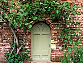 A DOORWAY IN THE WALLED GARDEN WITH FIG