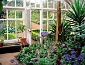 A GREENHOUSE BED KNOWN AS THE JUNGLE AT CAMBO HOUSE