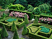 THE KNOT GARDEN AT 4 HILLSIDE, WITH ROSA MUNDI