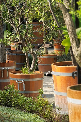 CLASSIC_WOODEN_ORANGERY_TUBS