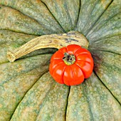PUMPKIN AND RED EGGPLANT