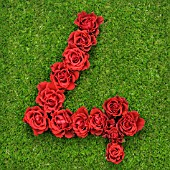 NUMBER 4 IN RED ROSES