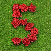 NUMBER 5 IN RED ROSES