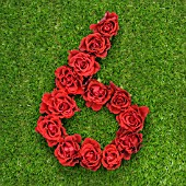 NUMBER 6 IN RED ROSES