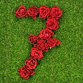 NUMBER 7 IN RED ROSES