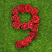 NUMBER 9 IN RED ROSES
