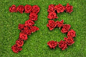 NUMBER 75 IN RED ROSES