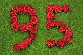 NUMBER 95 IN RED ROSES