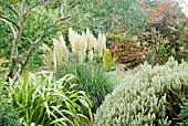 RHS ROSEMOOR GARDEN IN EARLY AUTUMN WITH EUCALYPTUS, CORTADERIA SELLOANA PUMILA IN FLOWER AND PHORMIUM YELLOW WAVE