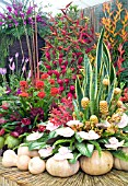 TROPICAL FLORA ON TRINIDAD AND TOBAGOS STAND AT HAMPTON COURT  WITH HELICONIAS, ORCHIDS, ALPINIAS, CURCUMA, GOURDS AND BUTTERNUT SQUASHES