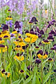 HELENIUM WYNDLEY WITH SCABIOSA CHILE BLACK