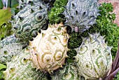 KIWANO, HORNED MELON, CUCUMUS METULIFERUS, SEMI-RIPE FRUITS.