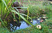 SMALL WILDLIFE POND IN GRASS WITH FALLEN APPLES