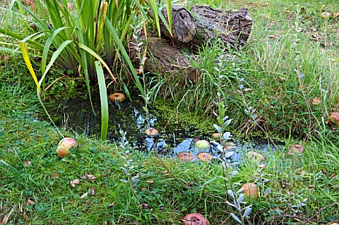 SMALL_WILDLIFE_POND_IN_GRASS_WITH_FALLEN_APPLES