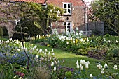 SPRING AT WAKEFIELDS GARDEN SHOWING PURISSIMA TULIPS