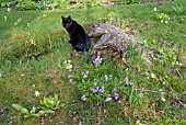 CAT IN THE WOODLAND GARDEN AT WAKEFIELDS