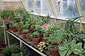 PROPAGATION - GREENHOUSE BENCH WITH STOCK PLANTS