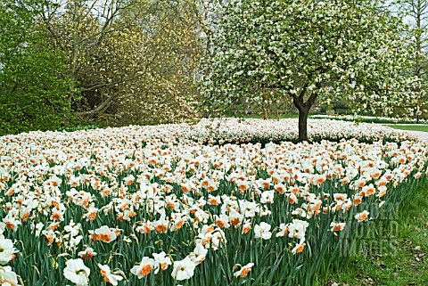 SPRING_GARDEN_WITH_NARCISSUS_AT_RHS_WISLEY