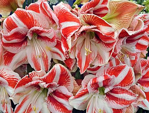 La fleur vintage flowers in season december 11 17 for Flowers in season in february