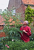 CARDOON IN FLOWER WITH NIGEL COLBORN, TO SHOW SCALE