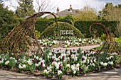 SPRING BEDDING DISPLAY WITH TULIP APRICOT BEAUTY AND HYACINTHS WOODSTOCK AND LINNOCENCE AND WITH WILLOW SCULPTURE