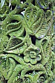 MOSS ENCRUSTED CARVING AT SINGAPORE NATIONAL ORCHID GARDEN