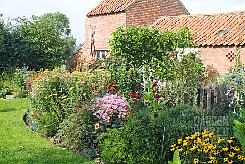 AUTUMN_BORDER_AT_WAKEFIELDS_IN_SEPTEMBER_WITH_CHRYSANTHEMUMS_RUDBECKIA_DEAMII_AND_OTHER_AUTUMN_PEREN