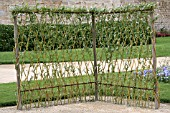 WILLOW LIVING FENCE