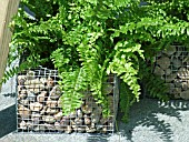 FERN,  WIRE FRAME FILED WITH PEBBLES AS RETAINING WALL