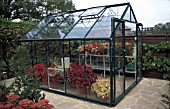 METAL FRAME GREENHOUSE ON CRAZY PAVING